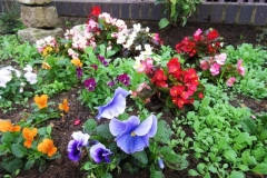 comm garden6